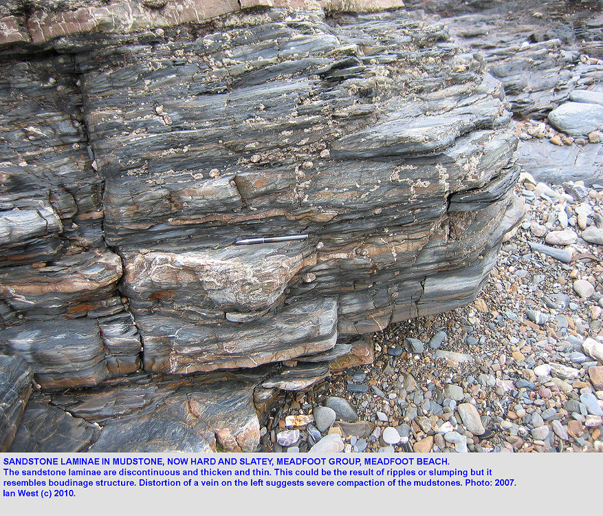 Sandstone laminae in slatey mudstone, Meadfoot Group, Meadfoot Beach, Torquay, Devon
