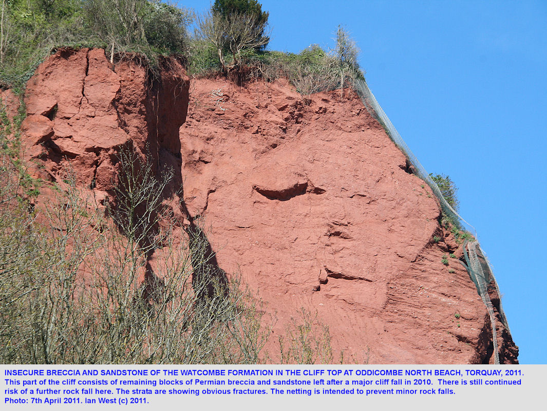 Unstable Permian breccia and sandstone in the cliffs of north Oddicombe Bay, Torquay, Devon, 2011