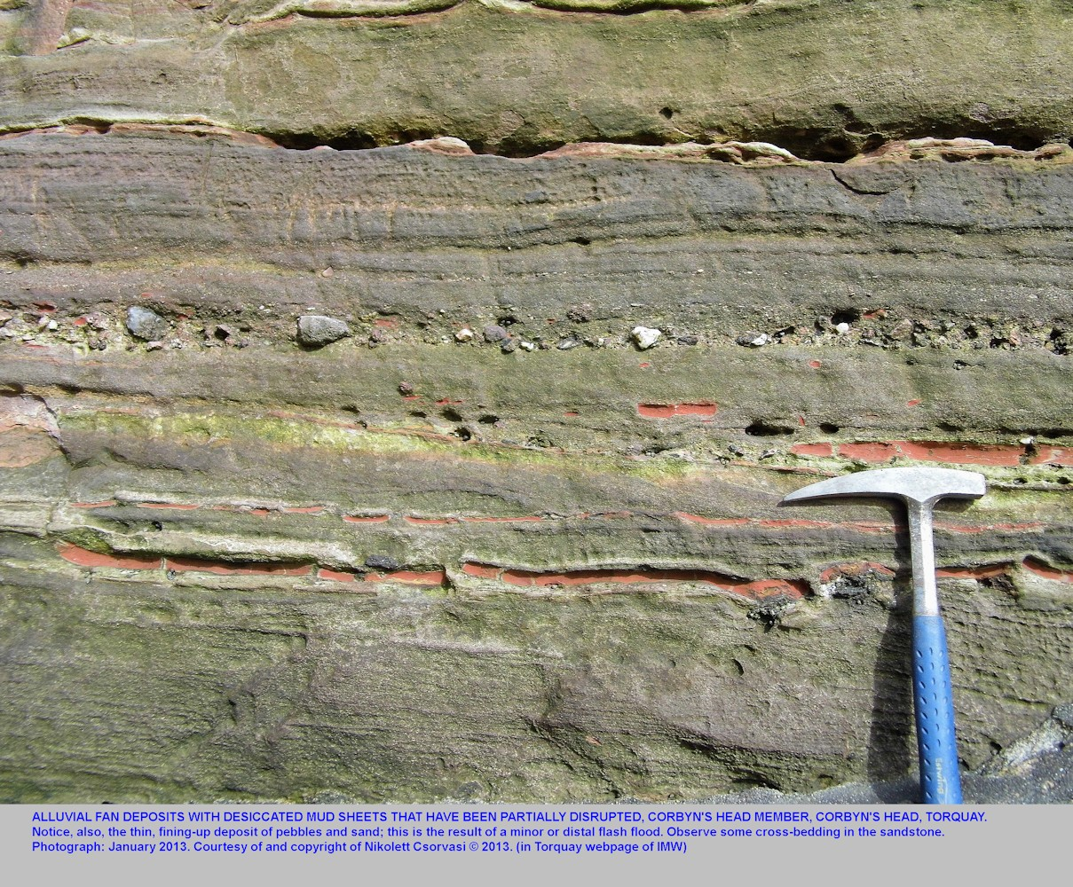 Details of Permian alluvial fan sediments at Corbyn's Head, Torquay, Devon, as photographed by Nikolett Csorvasi, January 2013