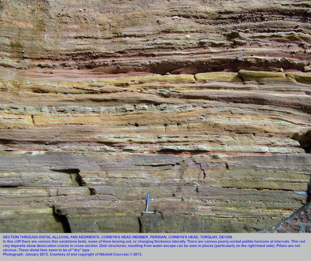 A cliff section through distal fan sediments in the Corbyn's Head Member of the Torbay Breccia Formation, Permian, Corbyn's Head, Torquay, Devon, 2013