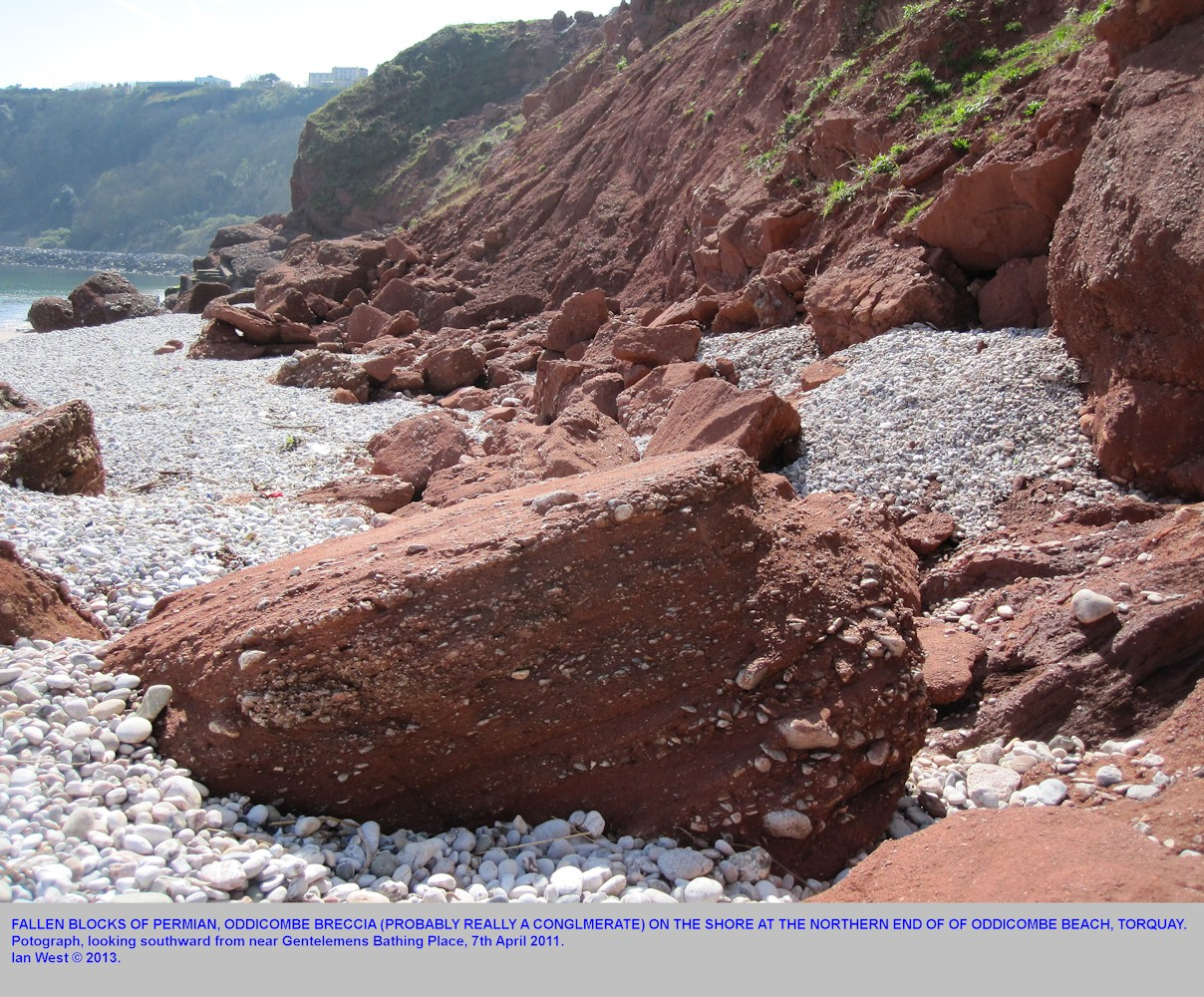 Fallen blocks of Oddicombe Breccia, perhaps really a conflomerate, at the northern end end of Oddicombe Beach, Torquay, Devon, 7th April 2011