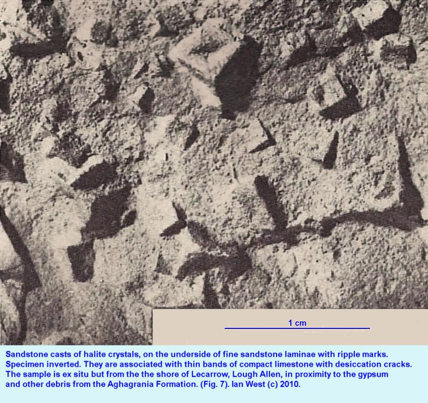 Clastic Casts of Halite Crystals, Lecarrow Shore, Visean, Carboniferous, County Leitrim Ireland
