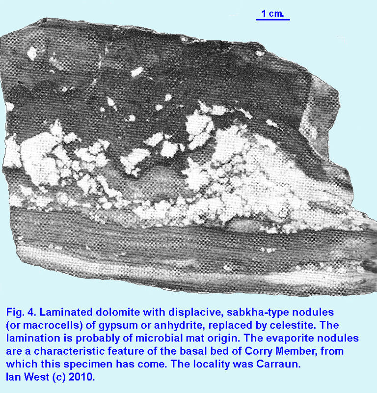 Original Fig. 4 - Celestite replacement of sabkha-type evaporite nodules, associated with microbial mat dolomite, Visean Evaporites, County Leitrim, Ireland