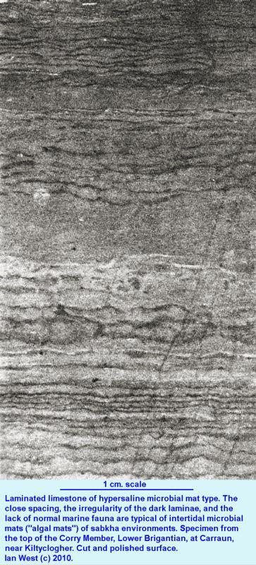 Microbial mat lamination in unfossiliferous limestone, Corry Member, Carraun, Lower Brigantian, Visean Evaporites, Leitrim, Ireland
