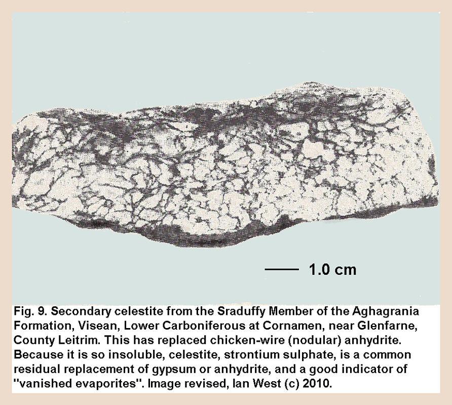 Nodular celestite replacing calcium sulphate, Sruduffy Member, Aghagrania Formation, Visean evaporites, Cornamen, County Leitrim, Ireland