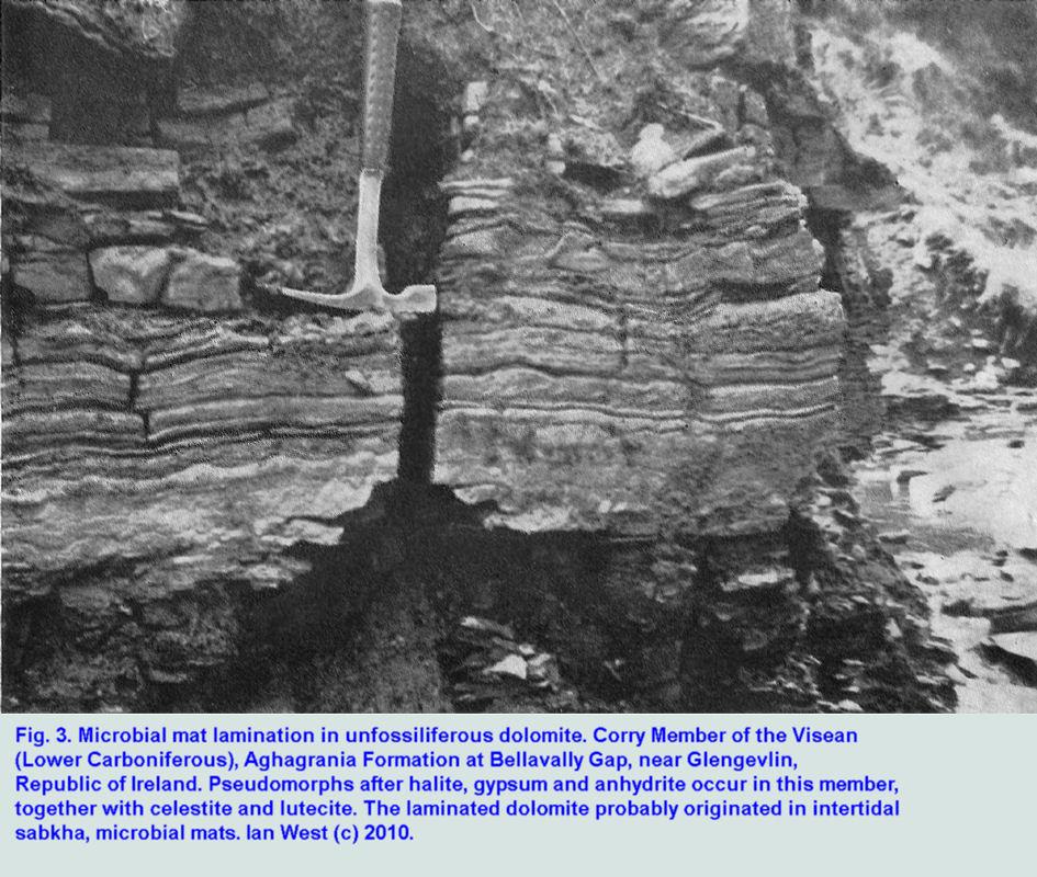 Microbial map, laminated dolomite, Corry Member at Bellavally Gap, Visean Evaporites, County Leitrim, Ireland