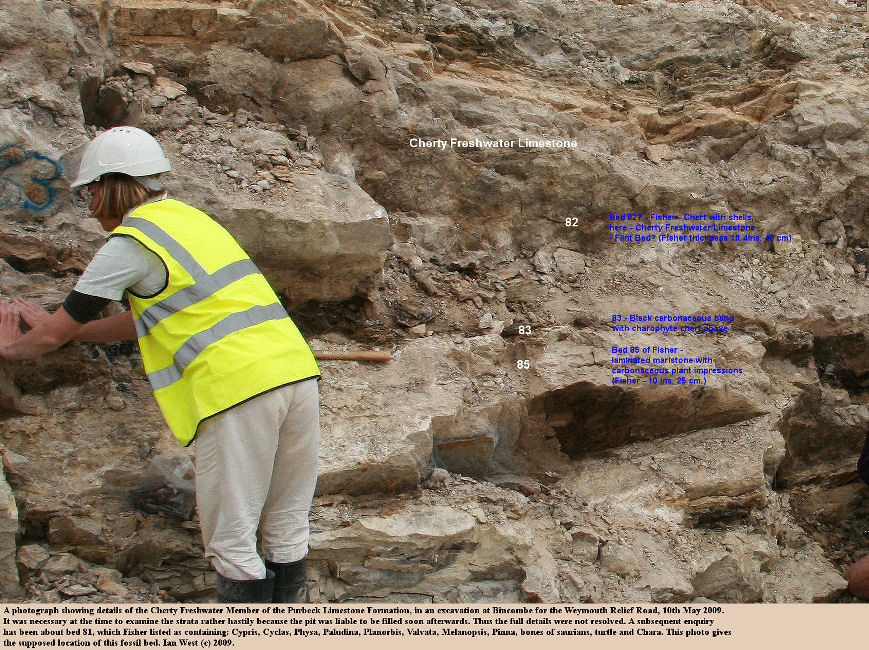 More details of the Cherty Freshwater Member and associated strata in the Middle Purbeck strata at an excavation at Bincombe, Weymouth Relief Road, Dorset