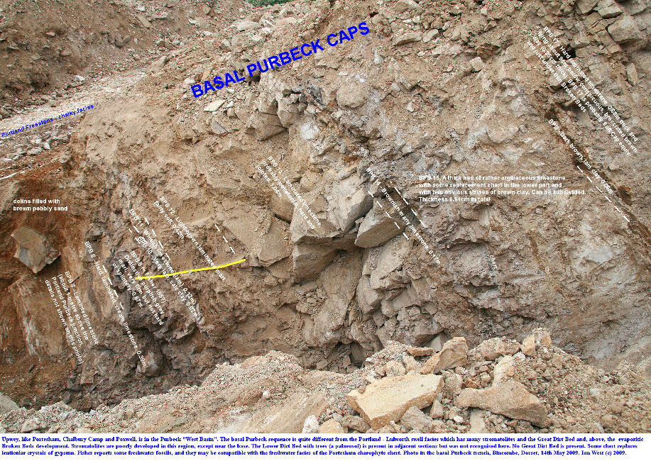 The basal Purbeck succession, in a trench excavation arranged by James Codd, at the works for the Weymouth Relief Road, at Bincombe, Dorset, 14th May 2009, with some beds of interest shown numbered and labelled