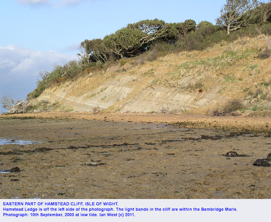 Light-coloured bands in the Bembridge Marls of the eastern part of Hamstead cliff, Isle of Wight, 2003