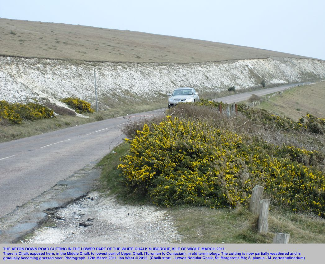 The Afton Down and Compton Down road cutting in Lewes Nodular Chalk, Sternotaxis planus to Micraster cortestudinarium Zones, near Freshwater Bay, Isle of Wight, 2011