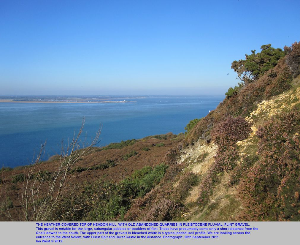 The heather-covered top of Headon Hill, Isle of Wight, with bleached Pleistocene flint gravels, 28th September, 2012
