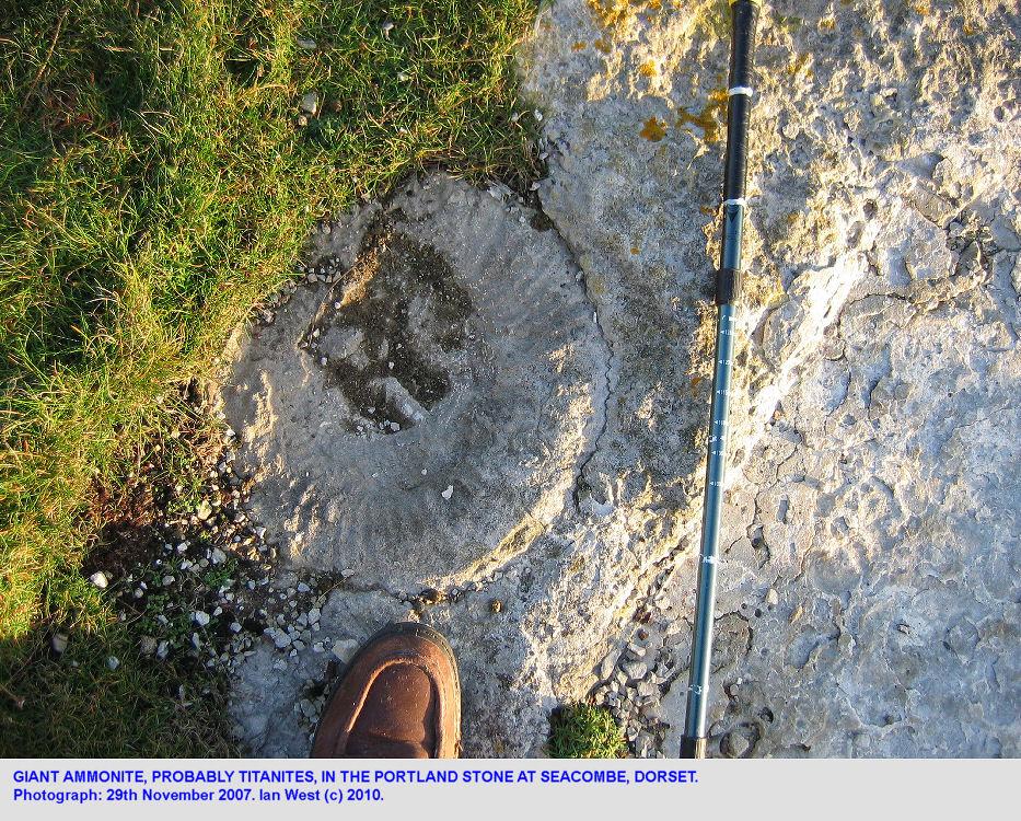 A Titanites ammonite in the Portland Stone at Seacombe, Dorset, 2007