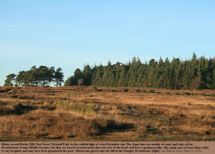 A general view of Hasley Hill, New Forest, Hampshire, from the Dockens Water valley, 7th December 2008