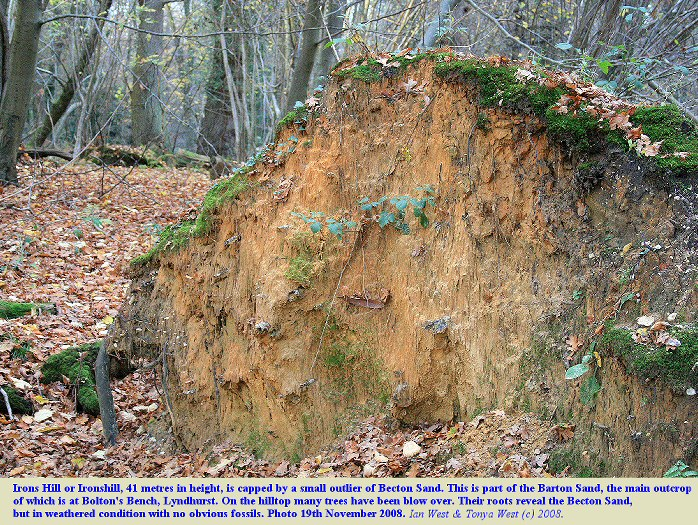 Becton Sand or Barton Sand exposed in a blown-over tree, summit of Irons Hill, New Forest, Hampshire, 19th November 2008
