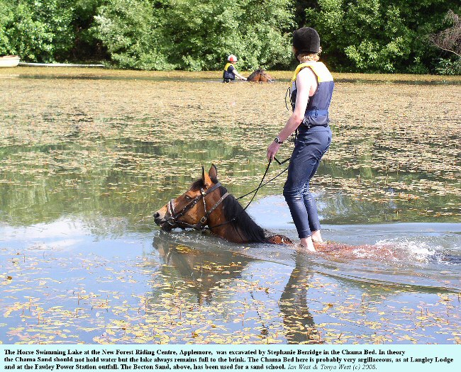 The Horse-Swimming Lake at Applemore, Marchwood, New Forest, Hampshire, was excavated in the Chama Bed, which hold water at this locality because of high clay content