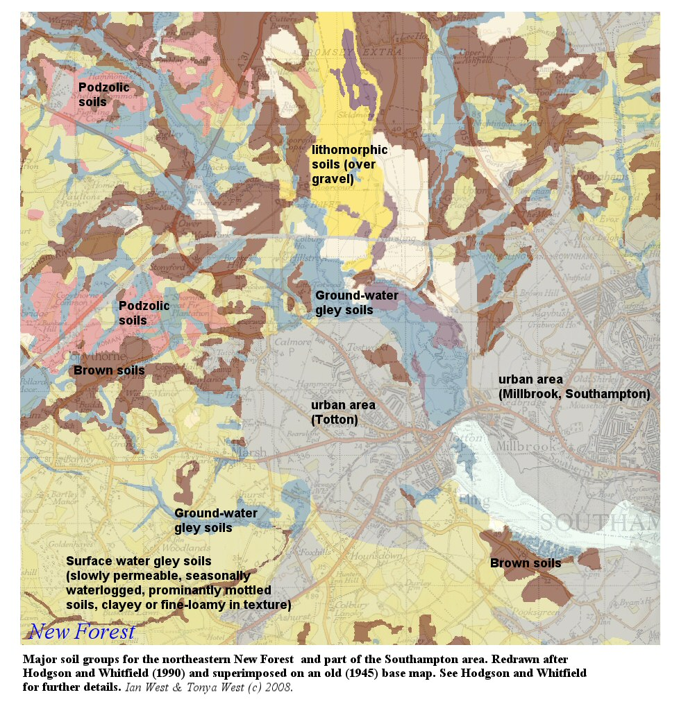 Geology of the New Forest National Park by Dr Ian West – Map Smokeless Zones Uk