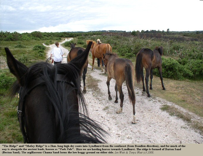 The Ridge, from Matley to Lyndhurst, New Forest National Park, is formed by an outcrop of Barton Sand (Becton Sand)