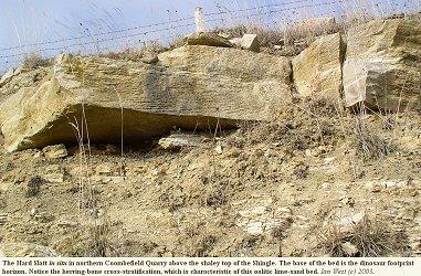 Hard Slatt with herring-bone cross-stratification, northern part of Coombefield Quarry, Portland