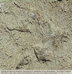 Two photographs superimposed of the footprints with partially raised claws