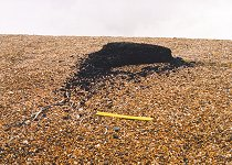 Peat on Chesil Beach, Abbotsbury, 18.10.2000