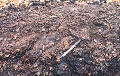 Peat on Chesil Beach, Abbotsbury, closer, 18.10.2000