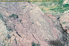 Reddish clays, palaeosols in the Reading Formation, Alum Bay, 2002