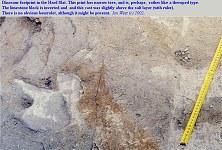 Narrow-toed dinosaur footprint in the Hard Slatt, Portland