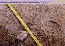 A brittle-fracture upbulge, Hard Slatt, Portland