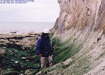 Intertidal notch at Whitecliff Point, Chalk cliffs, Isle of Wight