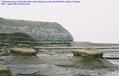 Mushroom rocks, produced by marine erosion at Old Nab, Staithes, Yorkshire