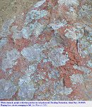 Reduction patches in a reddish palaeosol, Reading Formation, Alum Bay, 2003
