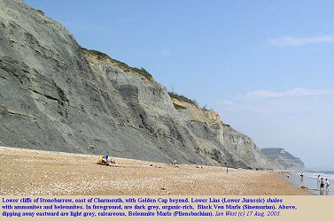 Cliffs east of Charmouth, Dorset, - general view