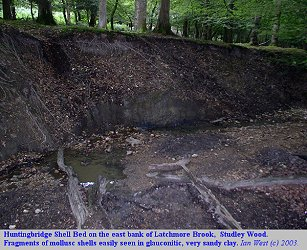 The Huntingbridge Shell Bed at Studley Wood