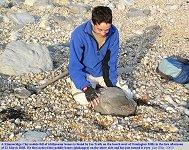 Find of ichthyosaur bones, Kimmeridge Clay, Osmington Mills, Dorset