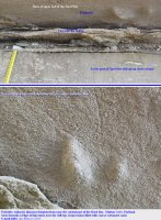 Dinosaur footprint in the Hard Slatt at Mutton Cove - labelled photograph
