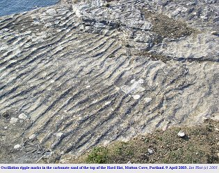 Oscillation ripple marks in Hard Slatt, cliff-top ledge, Mutton Cove