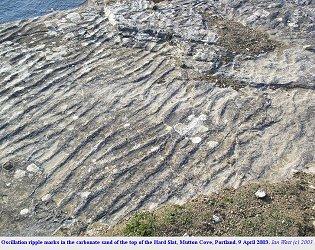 Oscillation ripple marks in Hard Slatt, cliff-top ledge, Mutton Cove, Dorset