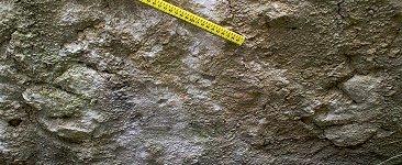 Two dinosaur footprints, Hard Slatt, Isle of Portland