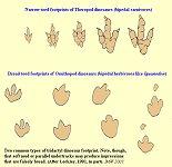 Dinosaur footprints - Theropod and Ornithopod types