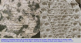 Comparison of fossil markings in Purbeck limestone and modern reptile (gecko) skin