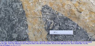 Tool marks - oscillation marks in the mud, Hard Slatt, Lower Purbeck Formation, Isle of Portland