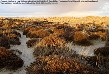 Heath-covered dunes and the Foredunes of sand with Marram Grass