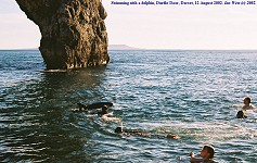 Dolphin - swimming with a dolphin at Durdle Door, Dorset, 1, 12 August 2002