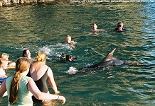 Dolphin - swimming with a dolphin at Durdle Door, Dorset, 2, 12 August 2002