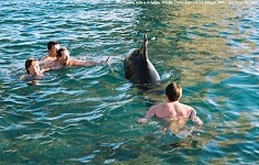 Dolphin - swimming with a dolphin at Durdle Door, Dorset, 3, 12 August 2002