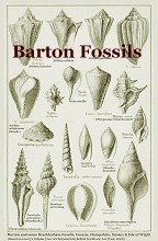 Some Barton Fossils