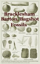 Barton and Bracklesham Fossils