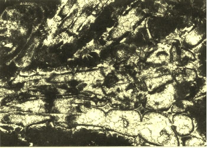 sedimentary environments and facies pdf