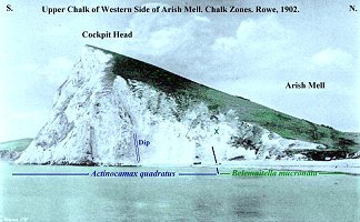 Chalk zones at Cockpit Head, Arish Mell, after Rowe