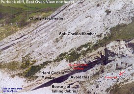 Labelled photograph of Lower Purbeck strata, including the Soft and Hard Cockle Members, east side of Lulworth Cove, Dorset